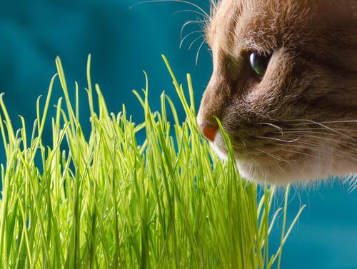 Gato oliendo una planta