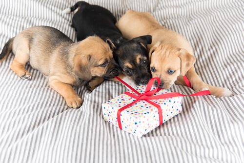 ¿Cómo elegir un regalo para mascotas?