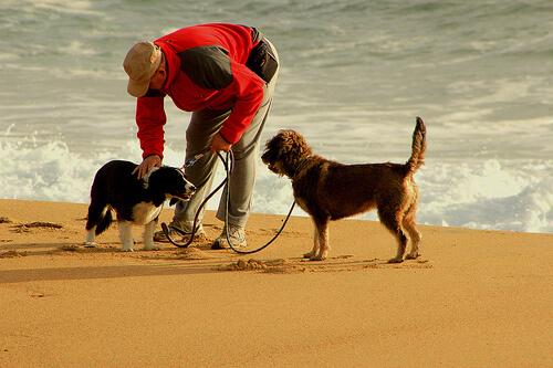 10 consejos para salir a correr con tu perro