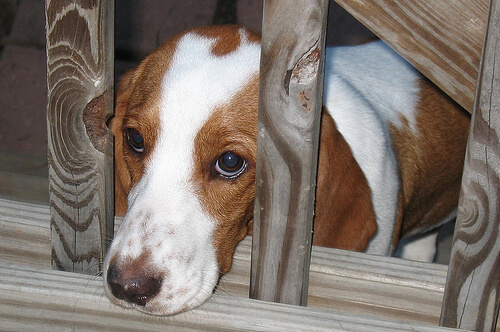 6 señales de miedo en perros: las claves para empatizar con ellos