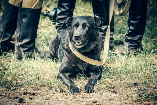 Los perros en la Segunda Guerra Mundial