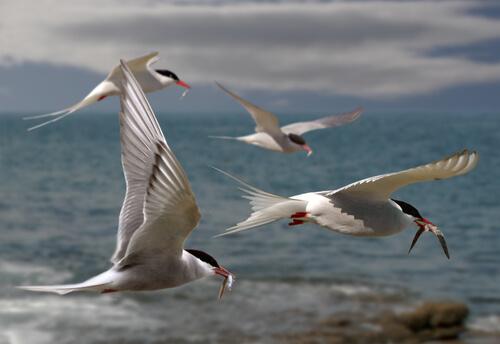 6 técnicas de pesca de aves marinas
