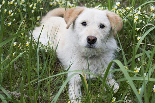 ¿Qué es el tercer párpado en perros?