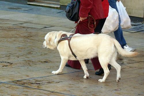 Tipos de arnés para perro