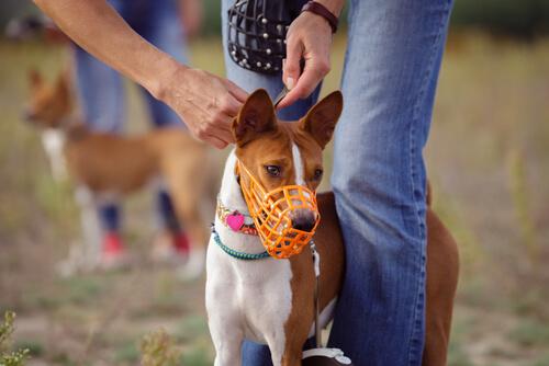 Tipos de bozal para perros