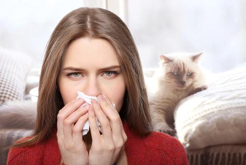 Alergia a los gatos: cómo tratarla