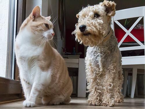 La ascaridiasis en perros y gatos