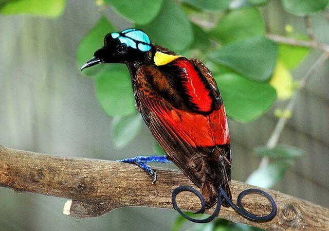 6 aves más impresionantes