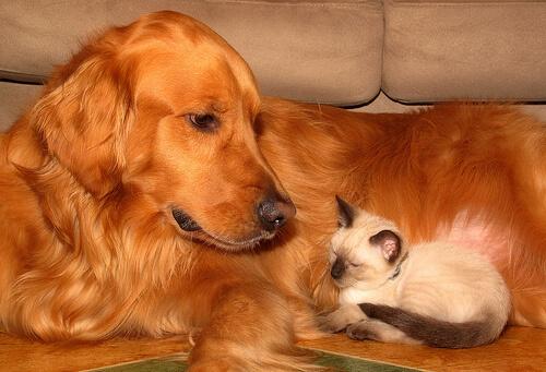 Cuidados para el bienestar de tu mascota