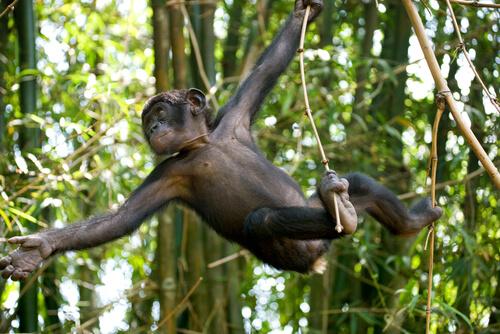 Mono bobono en la rama
