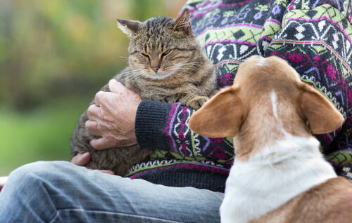 cat and dog with their owner