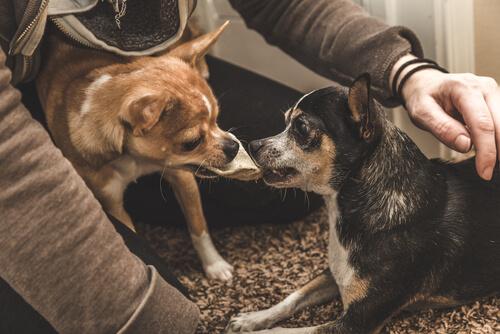 Celos en mascotas: tratamiento