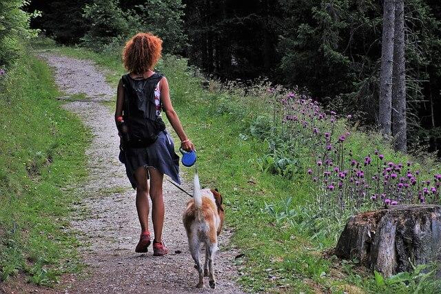 Cinco consejos para acampar con un perro