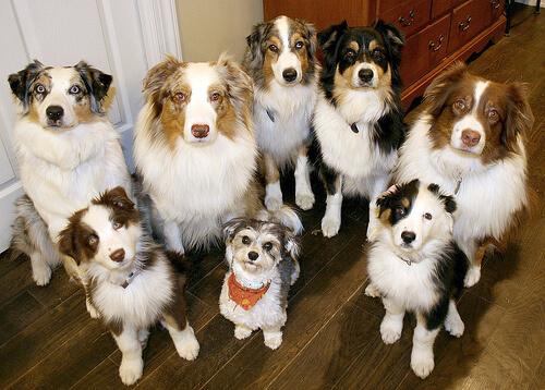 ¿Se pueden clonar perros?