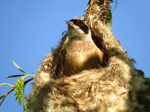 ¿Cómo hacen su nido las aves?