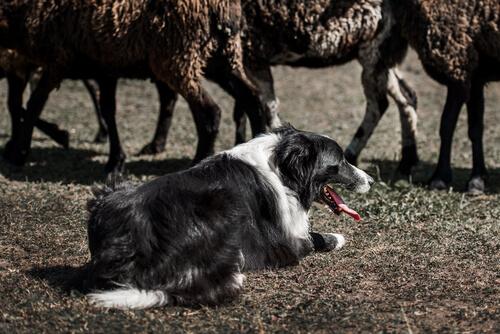 Comportamiento instintivo en animales