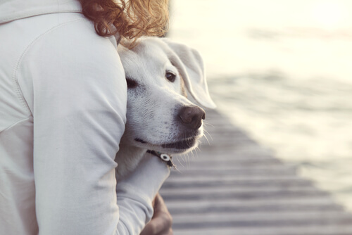Comportamiento perras celo