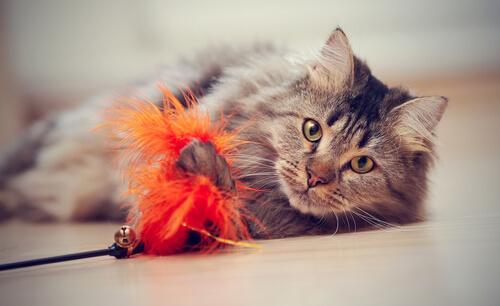Consejos para adiestrar gatos
