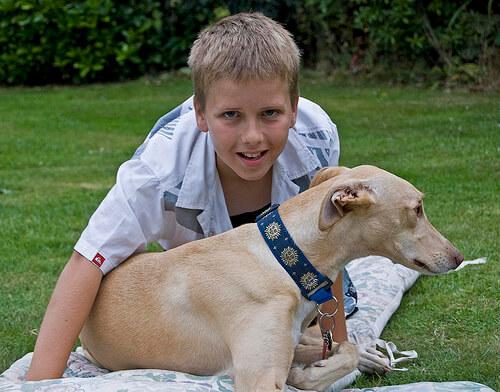 Perro con un niño en el cesped