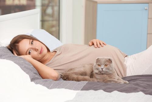 Convivencia con mascotas durante el embarazo: gato