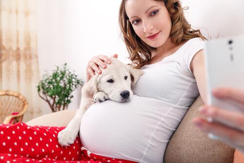 Convivencia con mascotas durante el embarazo: perro