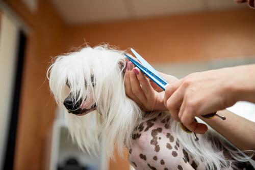 Cortarle el pelo largo al perro