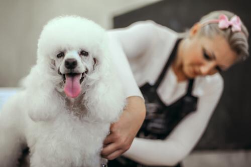 ¿Es bueno cortarle el pelo al perro?