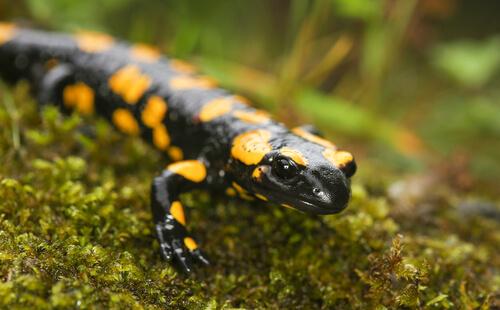 6 curiosidades sobre los anfibios