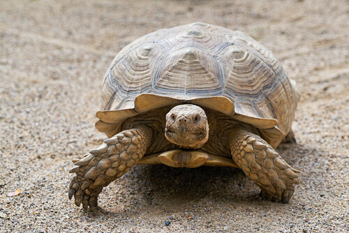 La tortuga es un animal omnívoro.