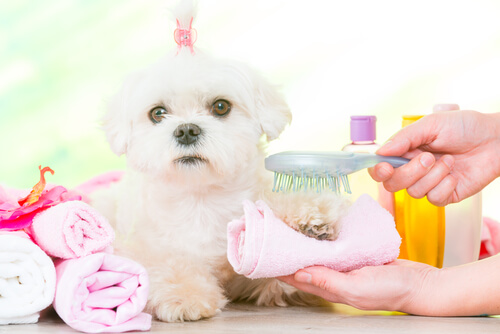Hacer pasta de dientes casera para perros