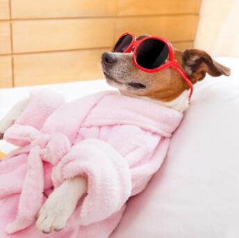 Hotel lujo perro India Spa