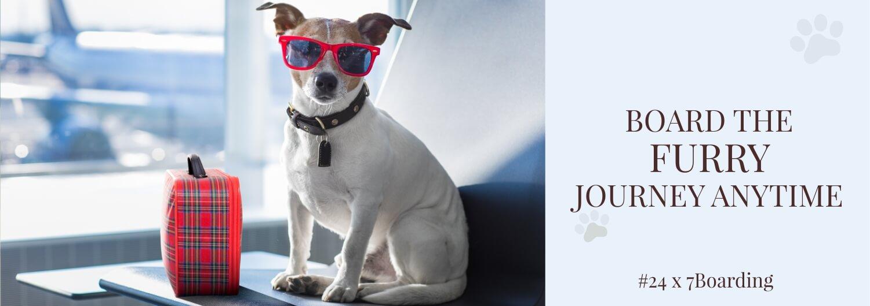 Descubre el hotel de lujo para perros en la India