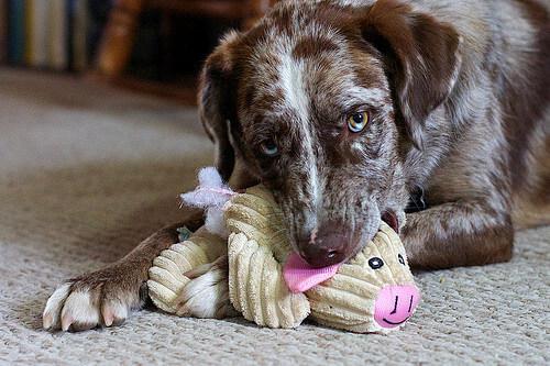 Formas de jugar con tu cachorro que quizás no conocías