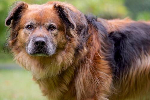 Lo que esconde la cara de culpabilidad de un perro