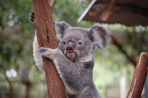 ¿Qué son los marsupiales?