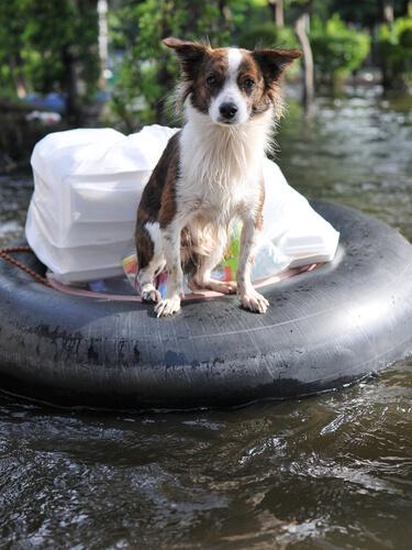 Mascota en diluvio