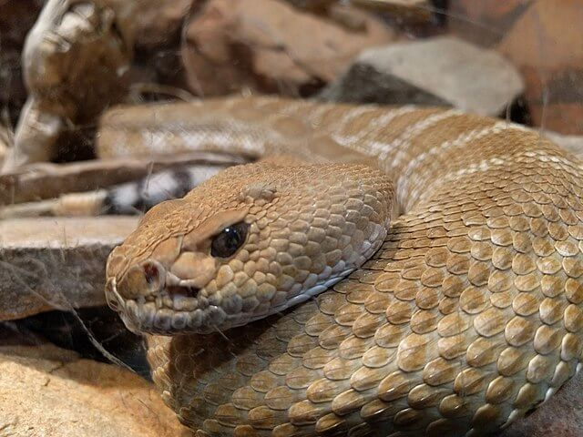 Problemas en la muda de las serpientes