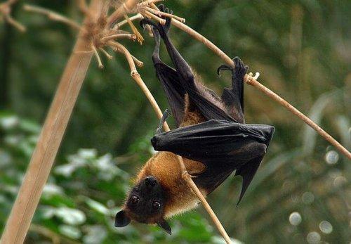 ¿Los murciélagos son peligrosos para las personas?