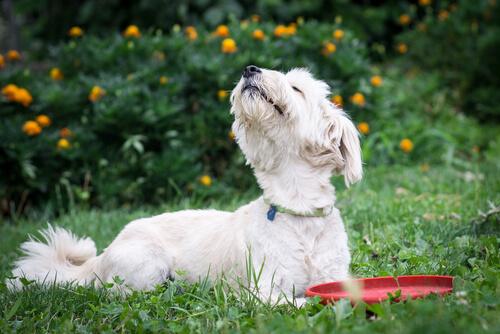 5 olores desagradables para perros