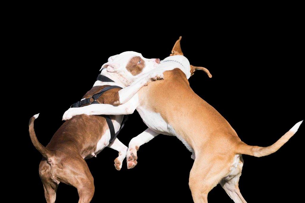 Consejos para detener una pelea de perros