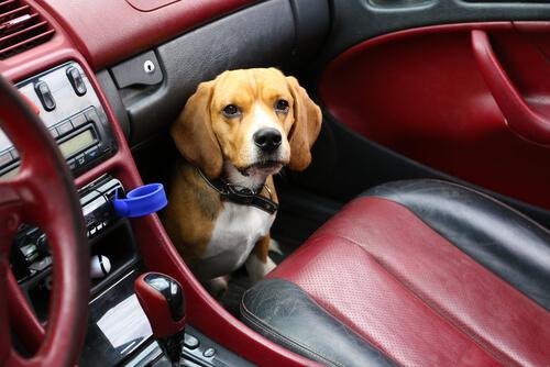 Perro en el asiento delantero del coche
