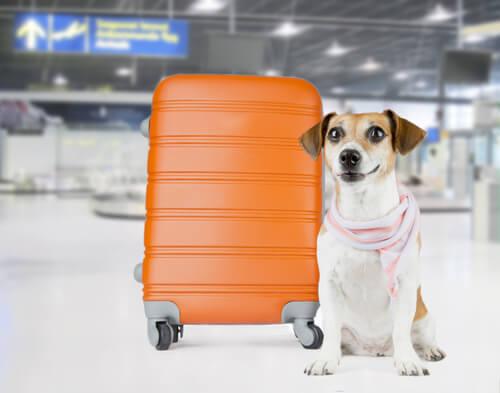 Perros en la bodega de un avión: maleta