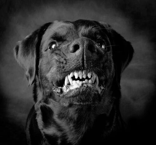 Perros violentos: ¿instinto o educación?