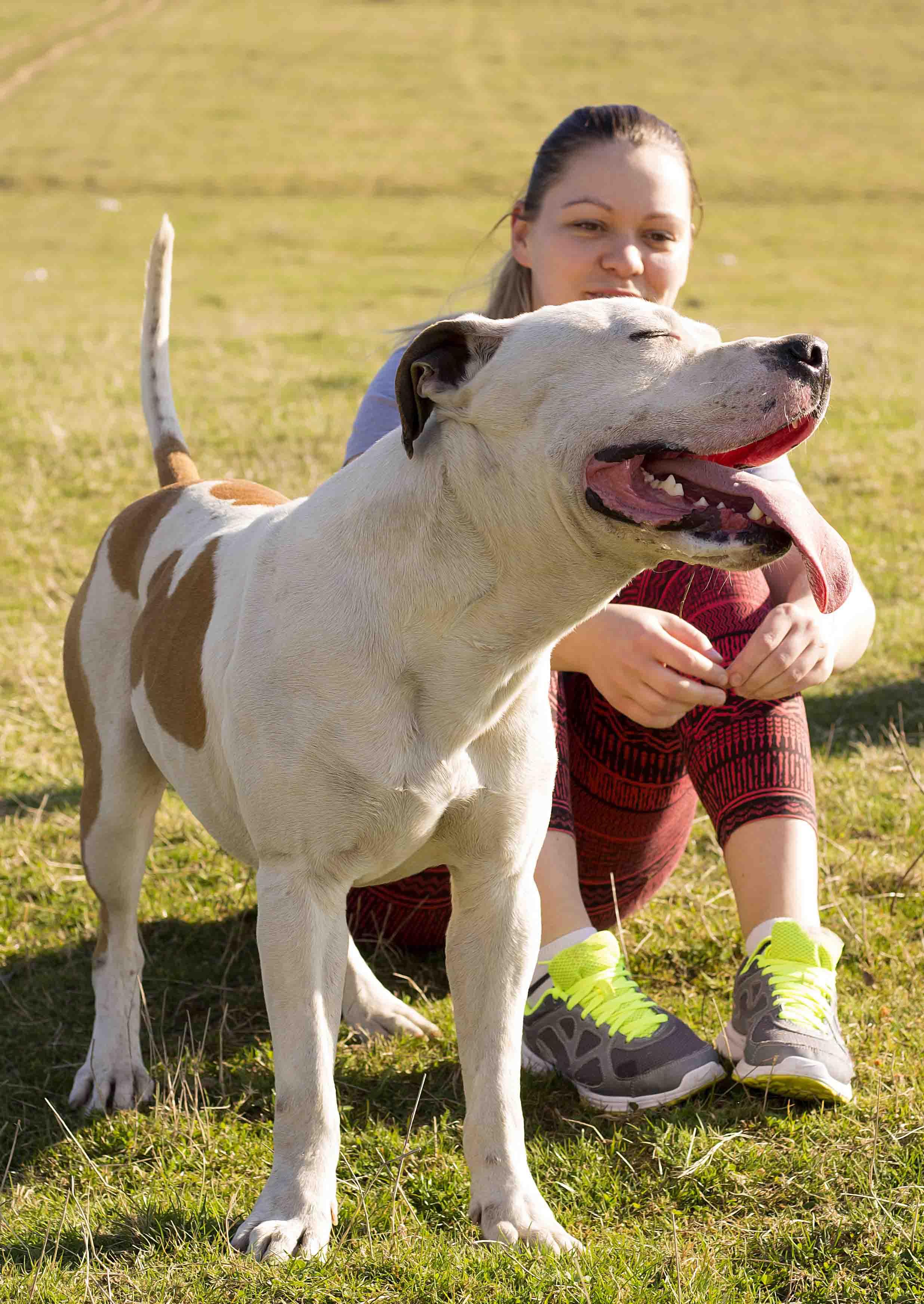 Pitbull perros niñera muy familiar y amigable