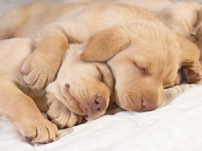 Elaborando un plan de salud para tu cachorro