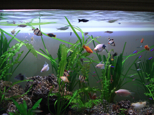 ¿Cómo elegir las plantas para tu acuario?