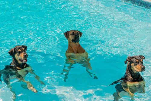 ¿Cómo quitar el miedo al agua en perros?