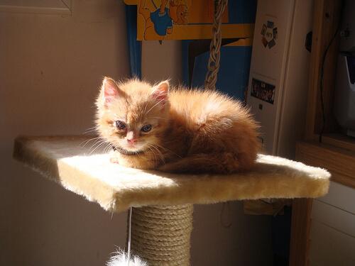Complementos y rascadores para tu gato