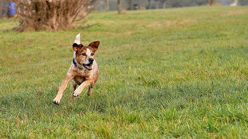 6 increíbles rutas para hacer con perros
