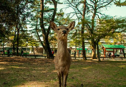 ¿Qué es un santuario de animales?